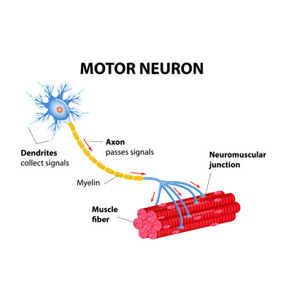 Motor Neuron Treatment